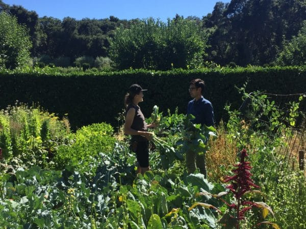 General Support consists of single-day, seasonal and short term projects in the Horticulture and Collections departments. These assignments do not usually require additional training beyond the initial volunteer orientation. There is no minimum service hours requirement to participate in General Support.