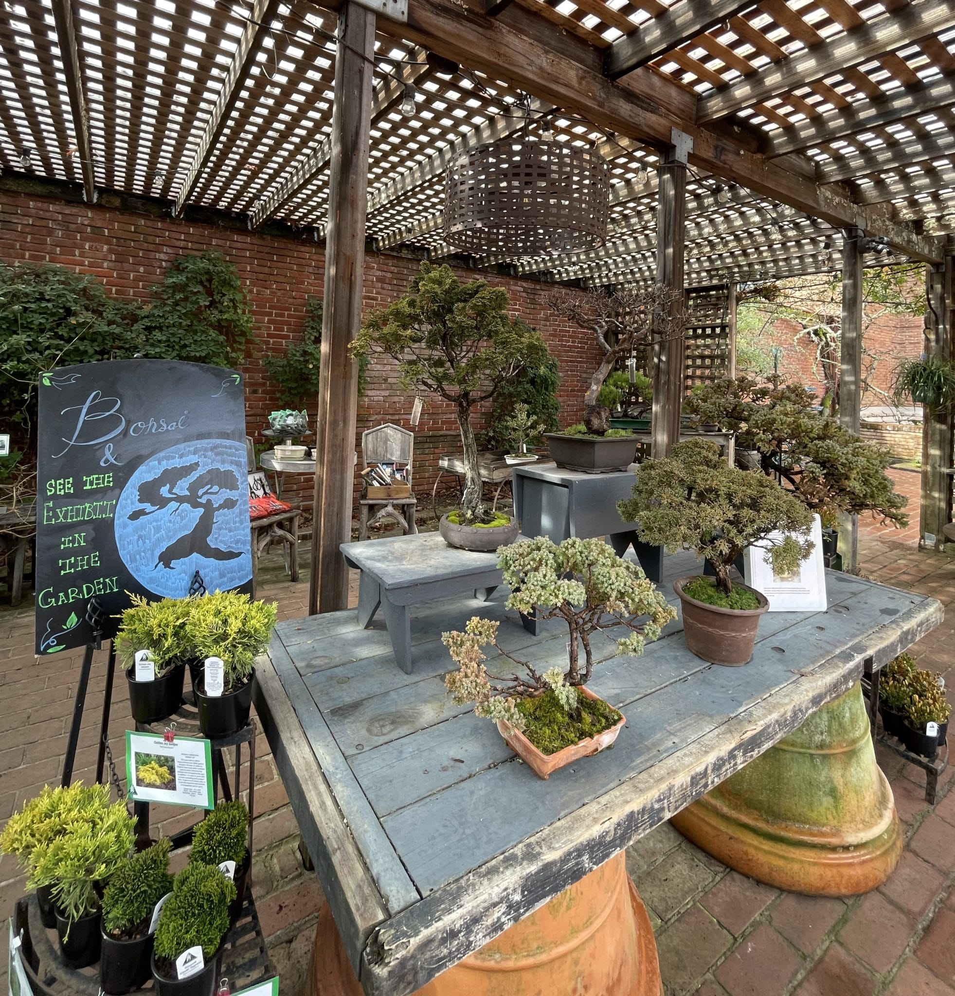 A beautiful collection of bonsai are available for sale at Filoli's Clock Tower Shop