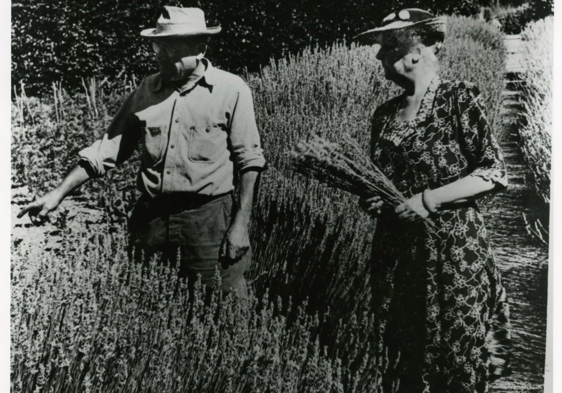 'Isabella Worn (Bella), standing on a garden path in the middle of beds full of lavender in the Garden, with Louis Mariconi (Head Gardener). Bella is wearing a v-neck patterned dress and brimmed hat and holds a sheaf of lavender. Tall poplar trees of the High Place visible in background.'