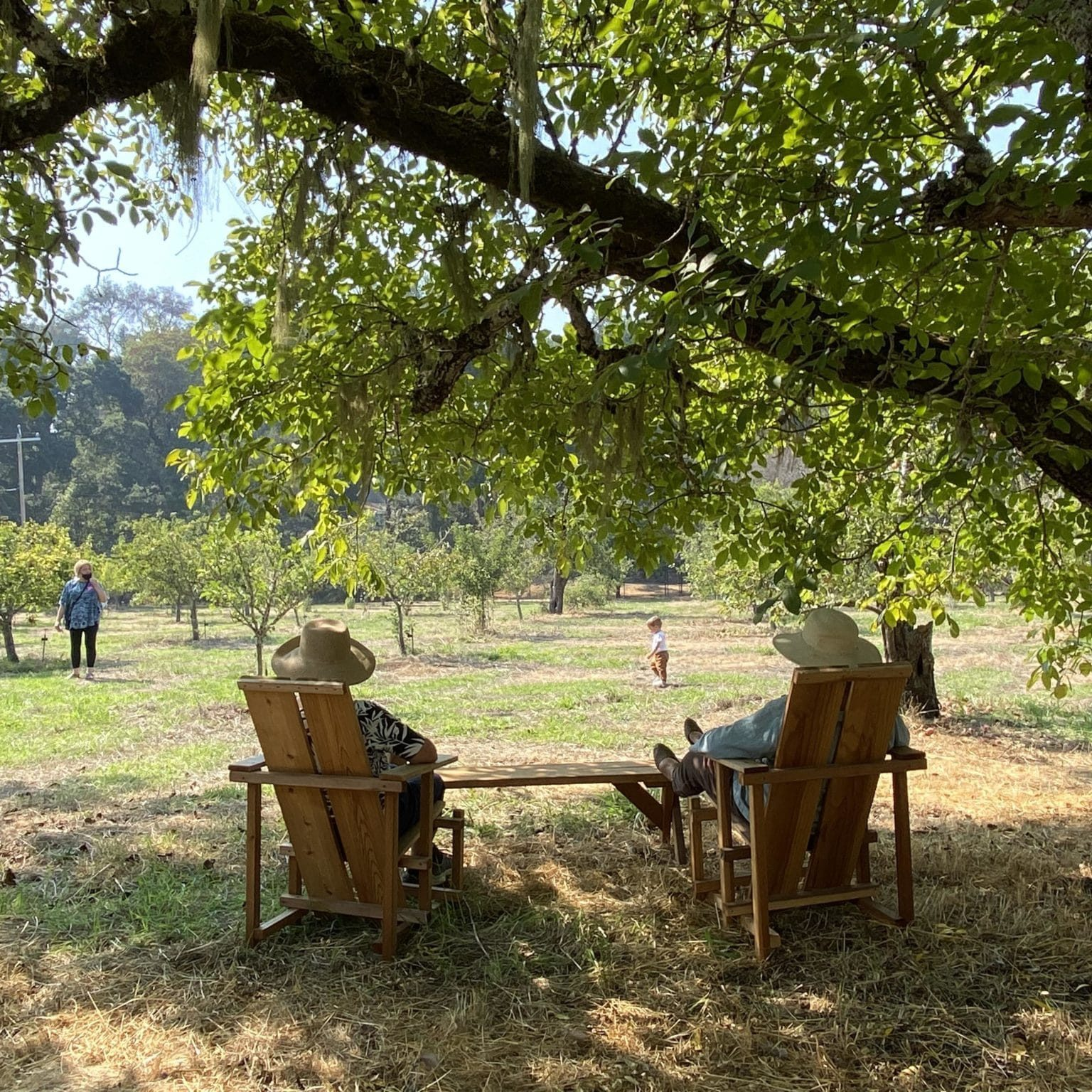 Settle into a redwood chair with a cup of cider.